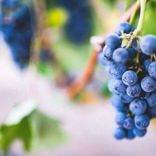 Grape Radio (Image source: ABC)
